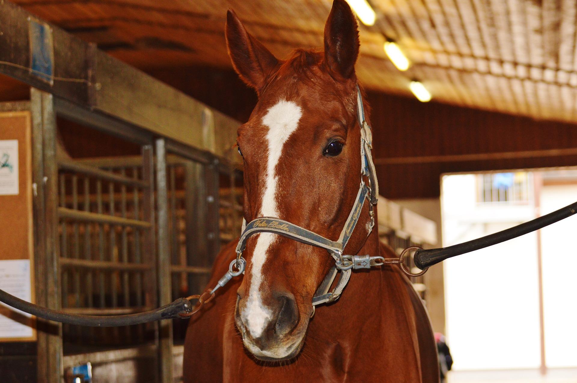 horse-1006348_1920